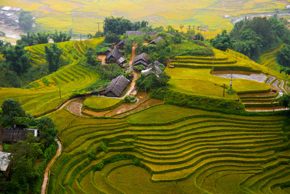 Terraced rice field at Muong Hoa Valley